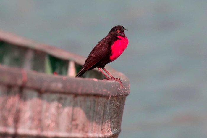 Observación de Aves 04 días / 03 noches.